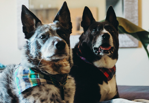 bonaventure apartments pet-friendly